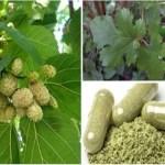 Esta planta é indicada para todos, mas você não tem idéia do que ela pode tratar: tumores, diabetes e hipertensão arterial