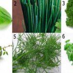 As ervas que você precisa usar para curar insônia e qualquer tipo de inflamação