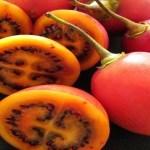 Este fruto promete mais do que muitas outras receitas de emagrecimento. Seus efeitos são muito rápidos