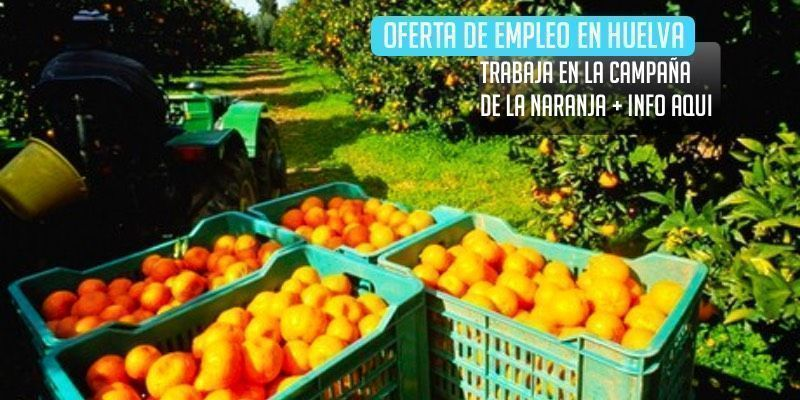 trabaja en la campaña de la naranja en Huelva