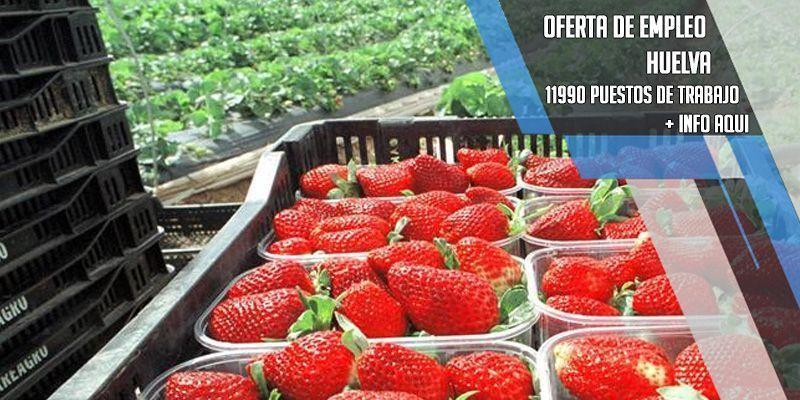 oferta de empleo en la recogida de la fresa