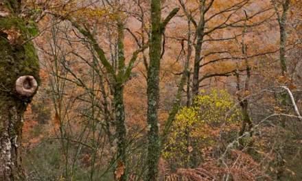 Tabeirós-Terra de Montes prevé buenos datos de turismo rural con la Rapa das Bestas