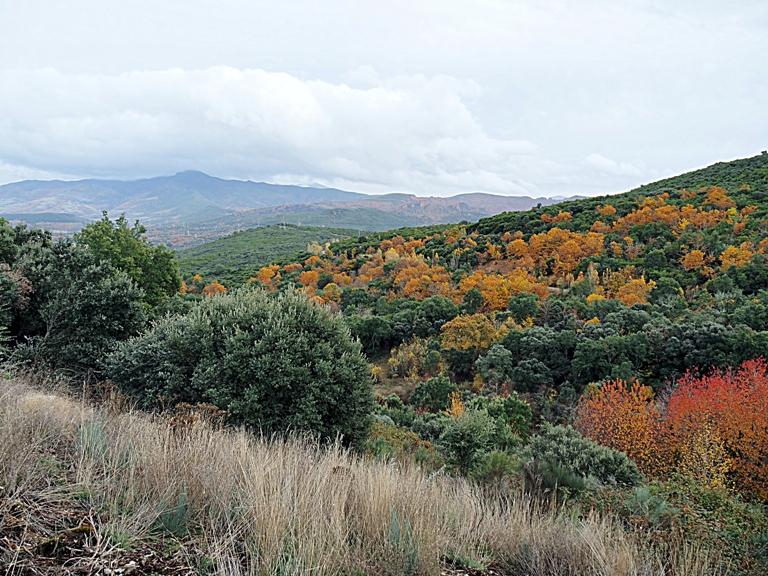 El Bierzo impulsa su riqueza natural con la iniciativa «Foresta y Templarios del Bierzo»