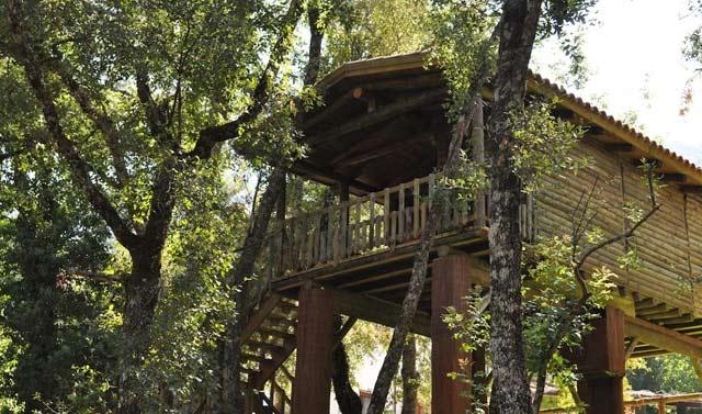 Cabañas en los árboles en Jaén