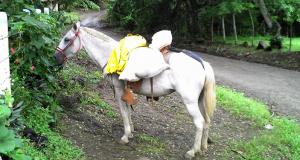 caballo-de-carga