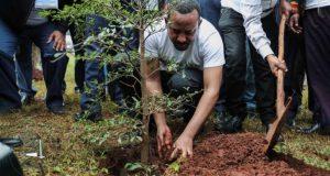 siembre-de-arboles-etiopia