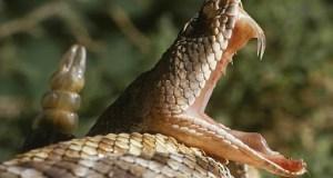 Gran serpiente aparece en una estación del subway NYC