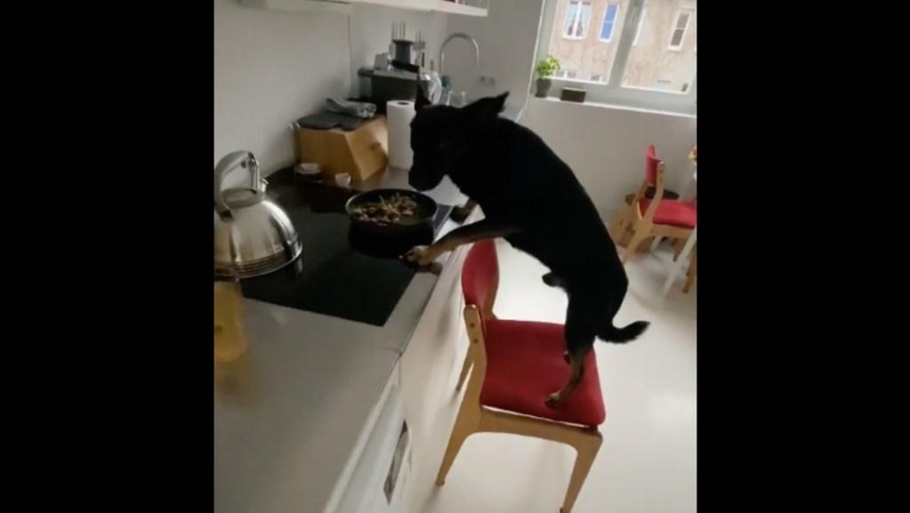Video: Perrito arrastra silla para alcanzar comida de la estufa y se vuelve viral - Noticieros Televisa
