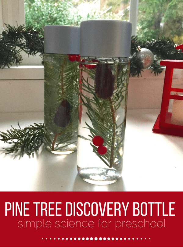 Pine Tree Discovery Bottles Preschool Science No Time