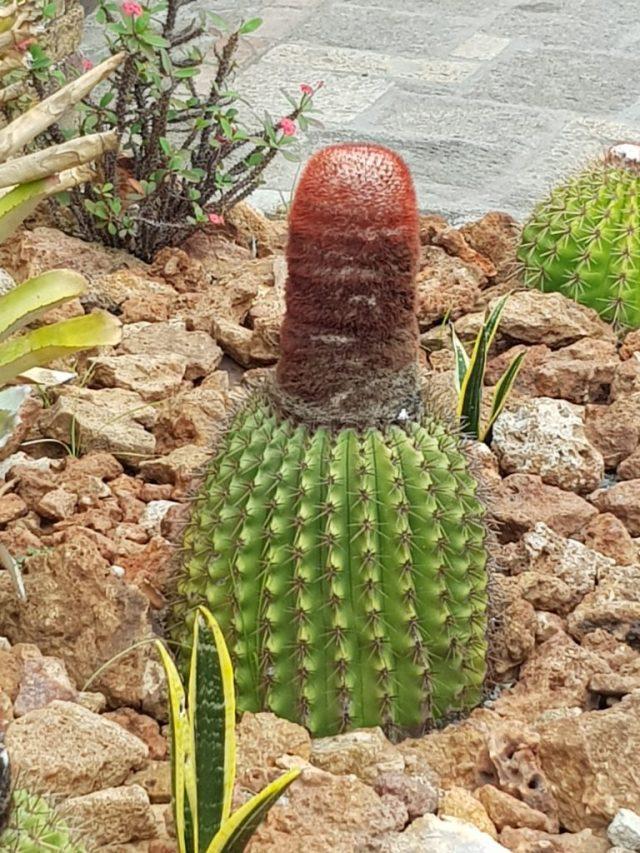 Crociera ai Caraibi MSC Antigua Flora