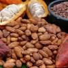 Ruta del cacao en San Martín