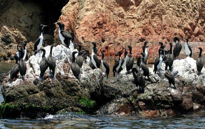 Sernanp publica Top 7 de Áreas Naturales Protegidas de costa, sierra y selva