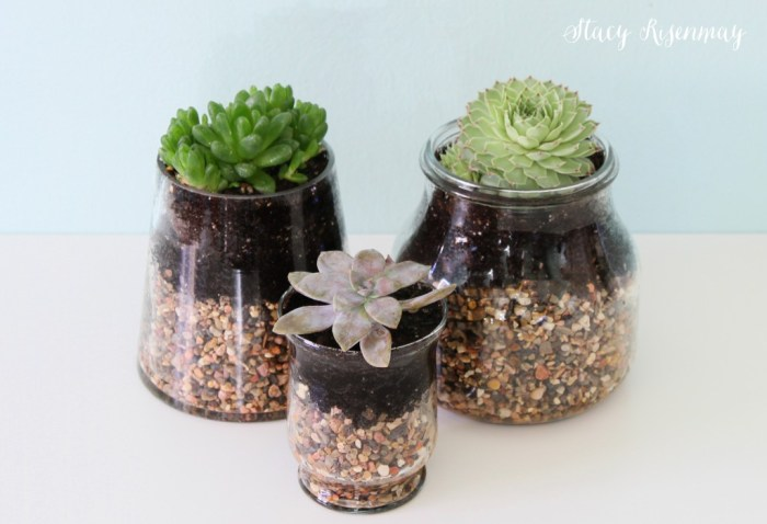 plants as friend gifts this holiday