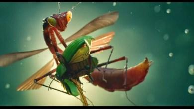 Photo of Insects. Como dejar alucinado al espectador con menos de 30 segundos.