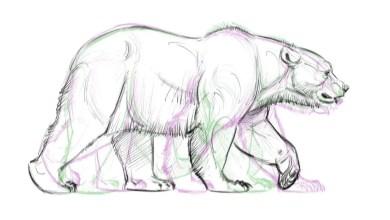 Como Animar un oso - ciclos de caminar - Tutoriales de Animación & Diseño de Personajes - Osos de Aaron Blaise