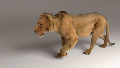Photo of Zeke The Lion – ZIVA VFX Software Demo