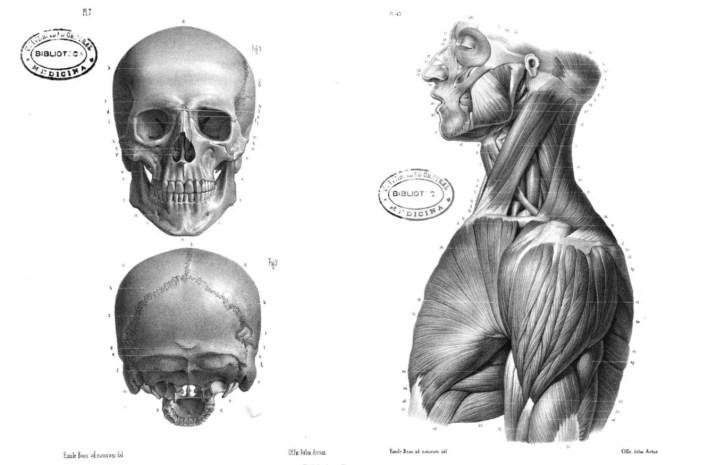 anatomia esqueleto y muscular