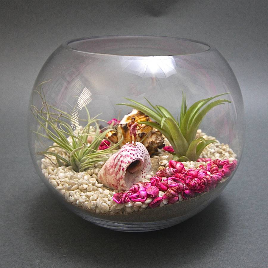 The Bather Airplant Underwater Terrarium Kit By London