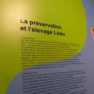 Musée Ernest Cognaq - Expo ânes - 6 avril 2016
