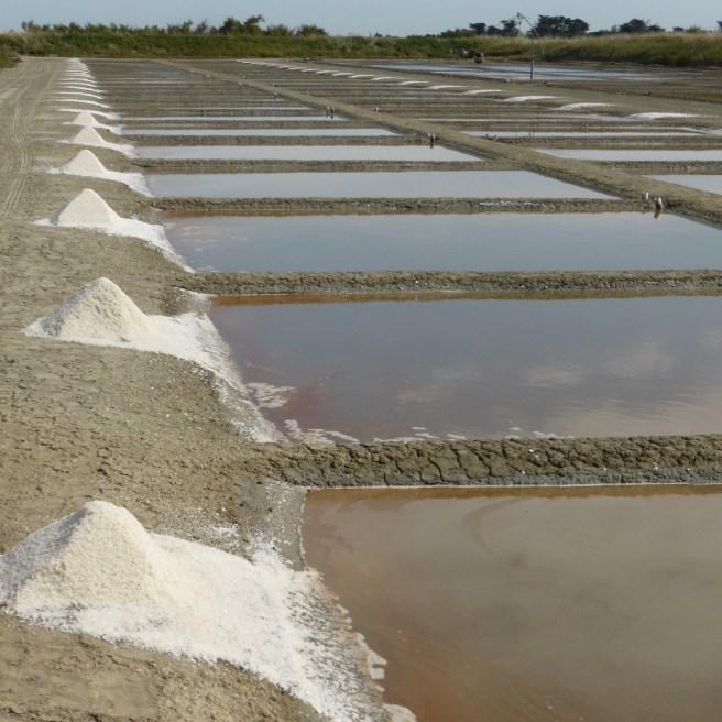 Gros sel - septembre 2014