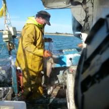 Pêche à la seiche - avril 2014