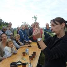 Loix - Atelier bouture d'olivier