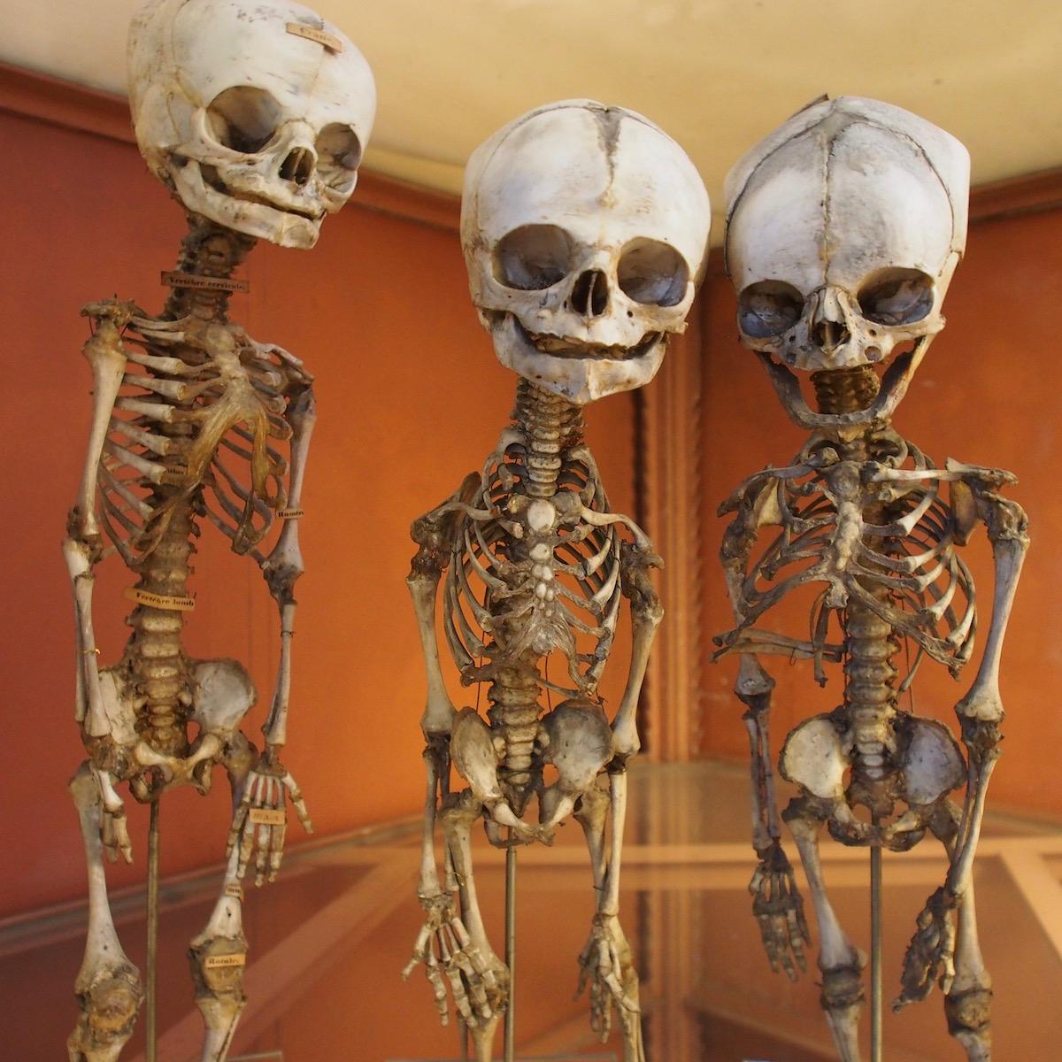 La Galerie d\'Anatomie comparée | Notre Paris