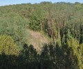 Plus jamais ça : le saccage forestier du Plateau d'Avron en Ile-de-France