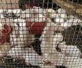 L'expérimentation animale : des souffrances inutiles ?