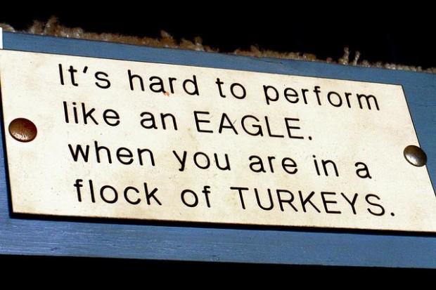 Eagles and turkeys