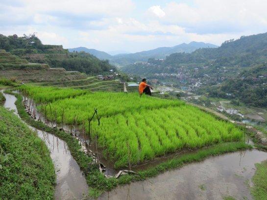 Notre guide dans les rizières