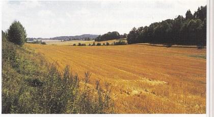Området mellom Hellaveien og Ulvås. For cirka 3500 år siden ble det tørt land her. Søndre og nordre del av Nøtterøy ble forenet. Foto: T. Paulsen.