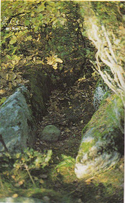 (Fig. 7) Steinkista i den plyndrede grav 22.