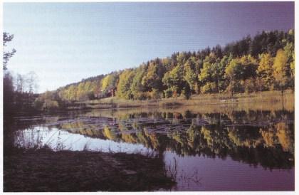 Stemningsbilde fra Strengsdalsvannet. (Foto: Grethe Horn).