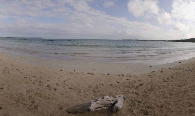 El Garrapatero, Isla Santa Cruz