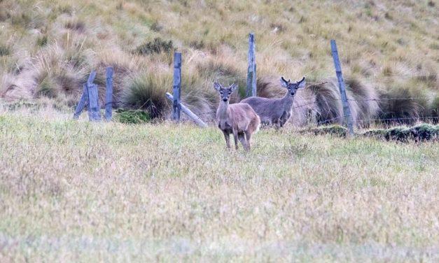 The Antisanilla Reserve: Condors & More