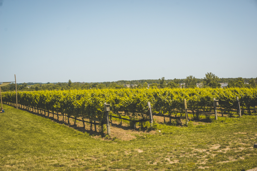 Niagara-on-the-Lake Winery Ravine Vineyard