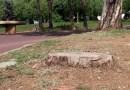 Els veïns de Canyelles demanen més manteniment al parc de Serra Martí