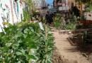 Date una Huerta es mobilitza per aturar el tercer intent de desnonament