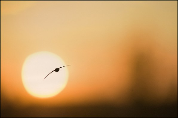 Imagen: 'Rumbo al sol', de Julen Landa