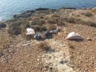 illa de ses rates 3
