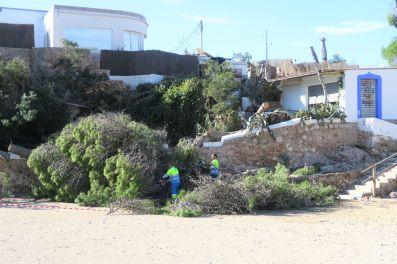 Trabajos para retirar los árboles arrancados por el tornado en Sant Antoni. Fotos: Ayto. Sant Antoni
