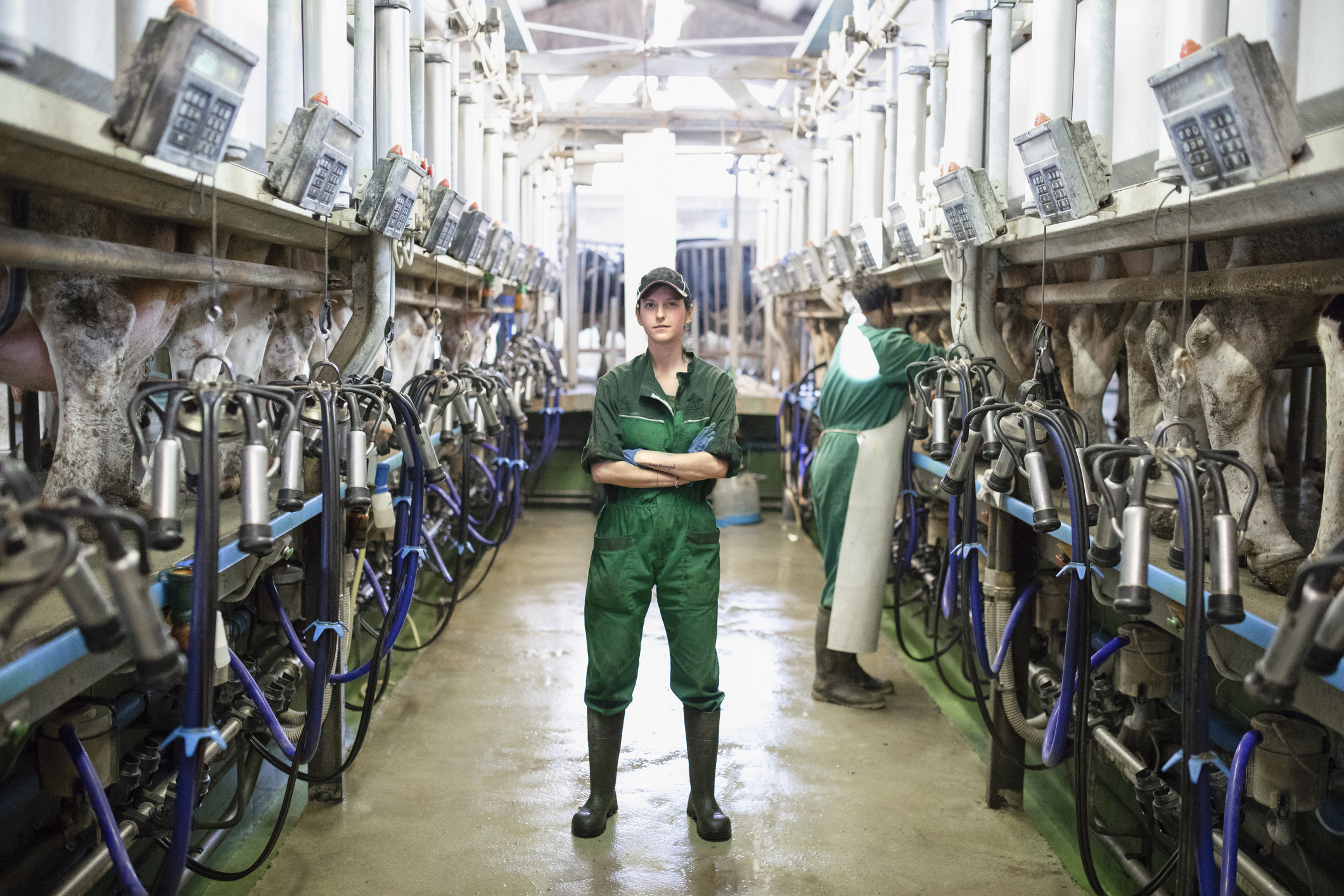 Female farm worker in a dairy barn