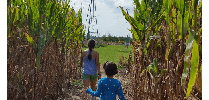 Children walking on a farm, in a corn field