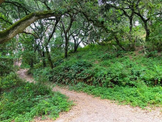 Tilden Park Berkeley