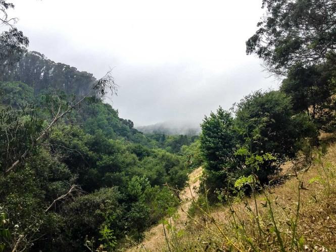 Wildcat Gorge Trail Berkeley
