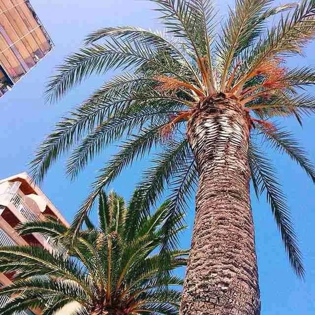 Lloret De Mar Holiday Pictures