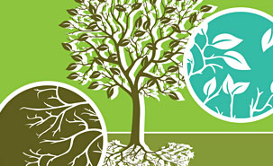 La phytorémédiation consiste en l'extraction progressive des contaminants du sol par les racines et vers les différents tissus de la plante. Une proportion variable de métaux-traces se retrouve dans le réseau racinaire, le tronc et les feuilles.
