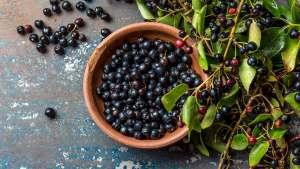 Maqui-Berry-Maki-Bobica-Candberrol-Nouvellune
