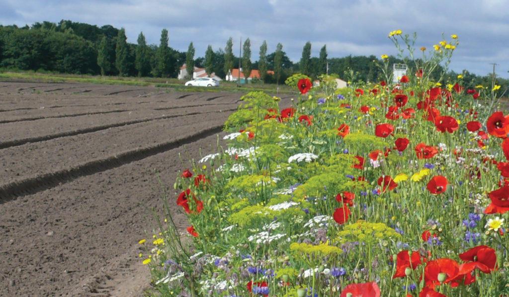 Nova Flore Champigné Les Hauts d'Anjou Solutions Naturelles Alternatives Insecticides
